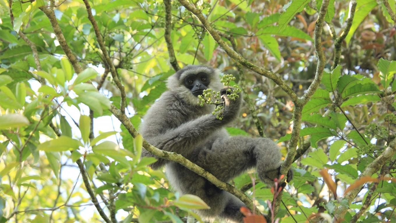 자바 긴팔원숭이          한 가족의 이야기 프로젝트 안내 이미지 입니다.